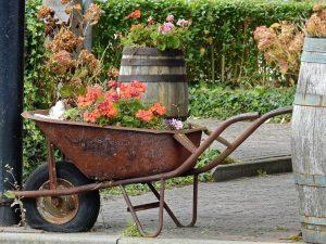 Brouette rouillée remplie de fleurs