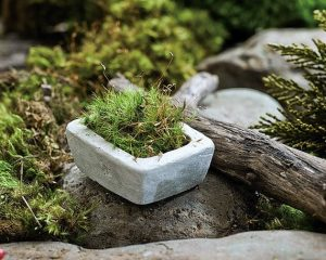 Pot en pierre pour plantes