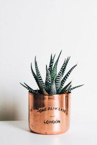 Pot en cuivre contenant une plante verte